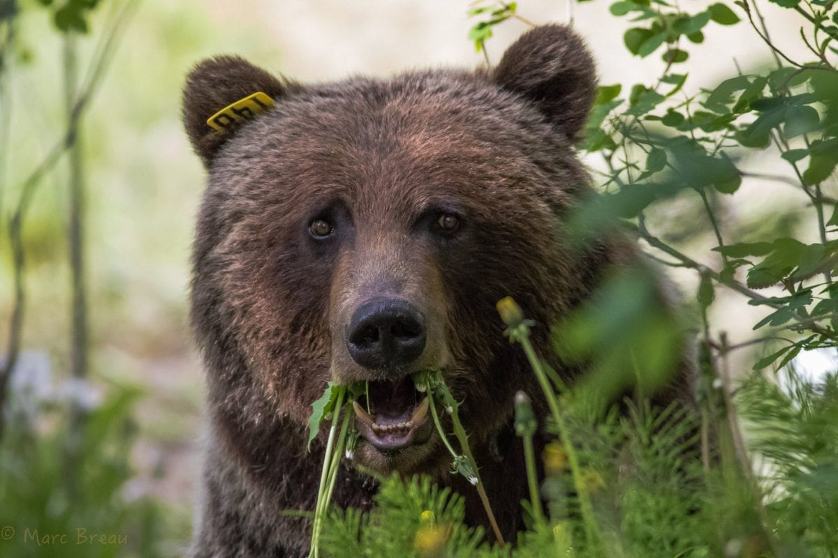 Bear 148_Podcast_Blog